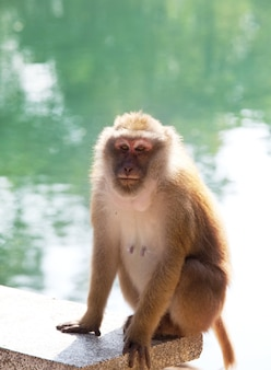 タイの熱帯林のサル