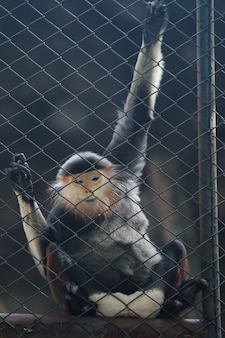 Monkeys sitting in a cage. thailand national zoo.