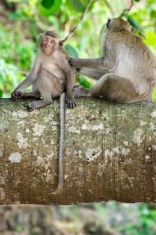 Monkeys on a tree branch