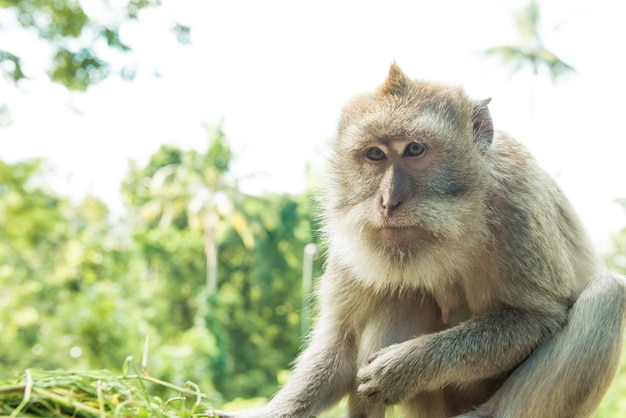Monkeys in ubud bali