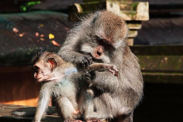 Monkies in the zoo