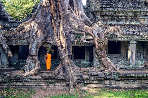 The monks and trees growing out of ta prohm temple, angkor wat in cambodia.