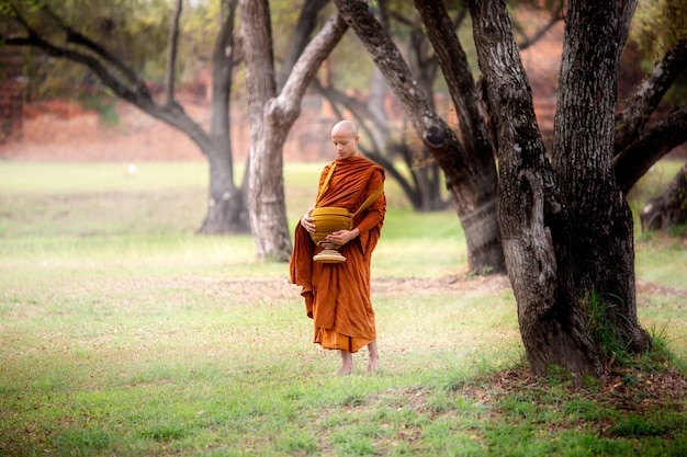 Monks walking in the park, thai monk meditating under a tree at ayutthaya,