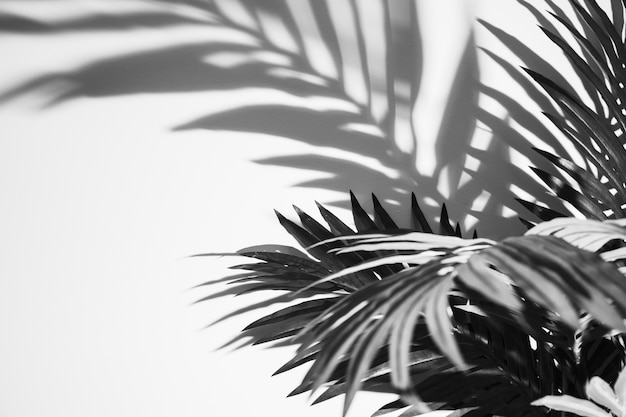 Monochromatic palm leaves and shadow on white backdrop