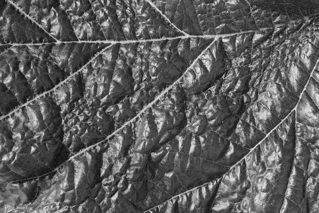 Монохромный лист текстуры