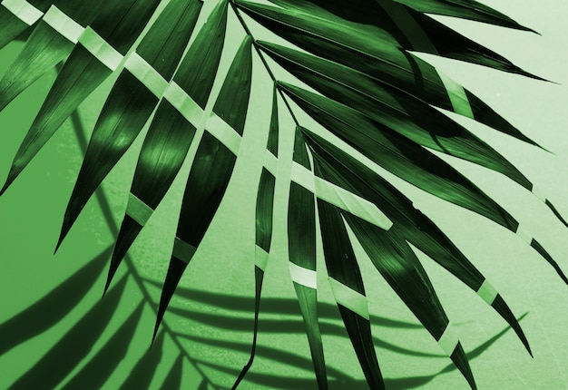 Monochrome painted tropical fern leaves
