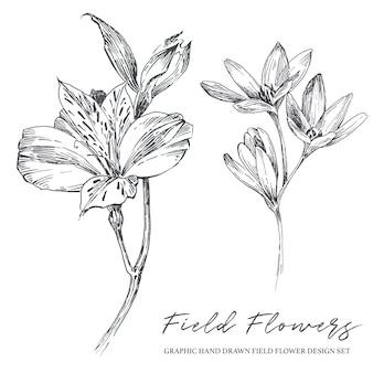 Монохромный деревенский старинный рисованной полевые цветы иллюстрации набор, изолированные на белом фоне.