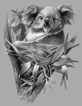 モノクロスケッチ-木の上のコアラ。詳細な鉛筆画
