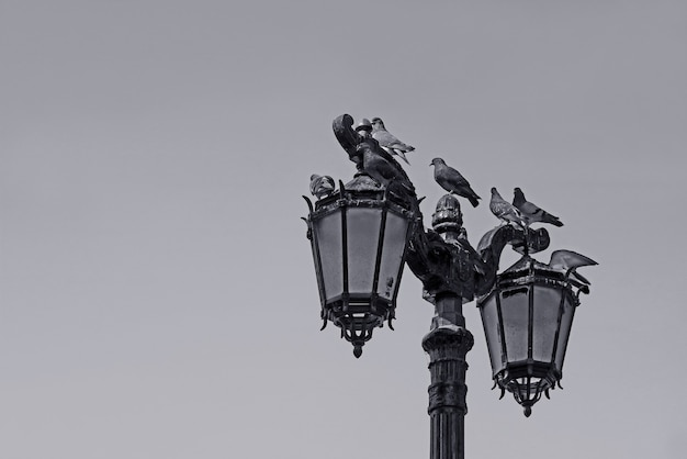Monochrome vintage street lamppost with a flock of perching pigeons