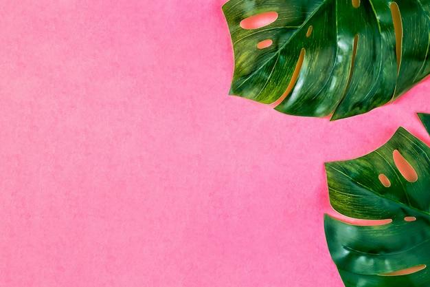 Лист монстра, пастельный тропический фон