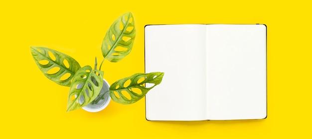 黄色の背景に開いたノートブックとモンステラadansoniiの葉またはスイスのチーズつる観葉植物。上面図