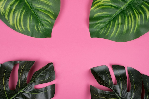 Monstera and calathea leaves on a pink background