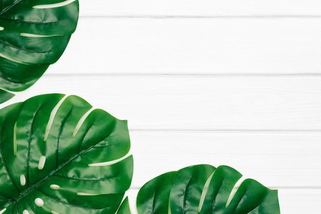 흰색으로 칠해진 나무 판자에 몬스테라 짙은 녹색 잎 추상 열대 꽃 배경