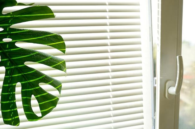 モンステラデリシオサ屋内の花が窓の近くに立っている、自宅の鉢植えの花