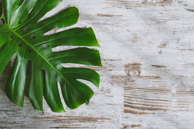 ぼろぼろのシックな白い木の上のmonstera deliciosaの葉。テキスト用のスペース
