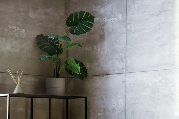 Monstera flower in a pot on a woman of a gray wall on a rack