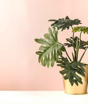 Monstera in a gold pot on a pink background art concept minimalism