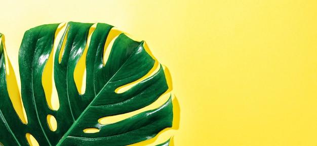 Монстера зеленый лист на желтом