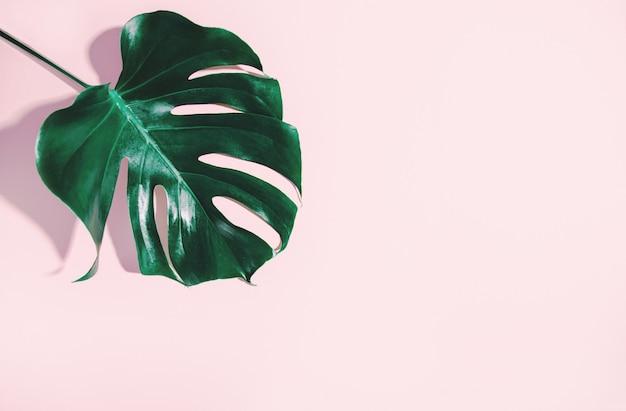 Monstera green leaf on pink