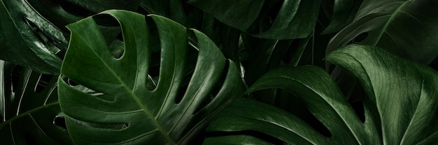 Carta da parati natura monstera foglie verdi