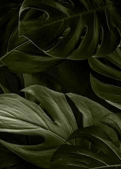 Carta da parati sfondo verde natura monstera