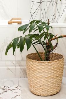 Комнатное растение монстера в плетеном горшке в ванной. украшение жилого помещения зелеными растениями. фото высокого качества