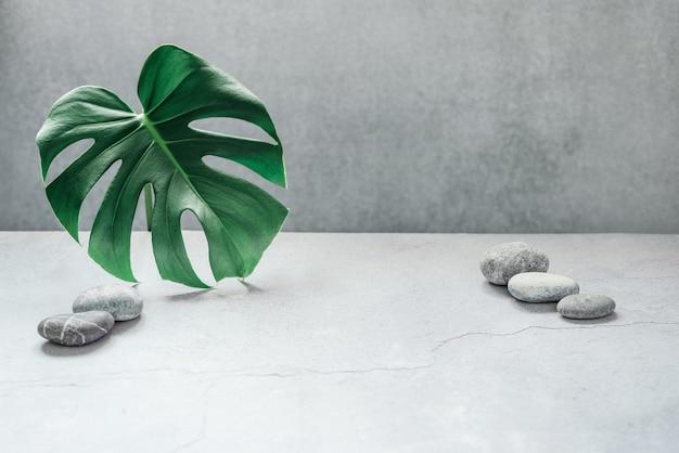 복사 공간 회색 콘크리트 배경에 monstera 잎과 자갈 돌. 여름 자연 스파 패션 개념.