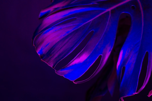 Monstera leaf in blue neon light close up. creative photo