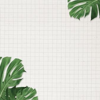 Cornice di foglie di monstera su sfondo di carta a griglia