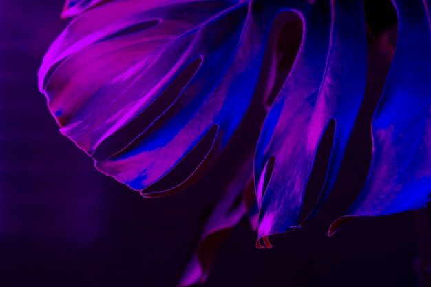 Лист monstera в голубом конце неонового света вверх. креативное фото