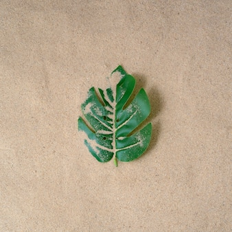 Monstera 잎 mitragyna speciosa kratom 녹색 잎은 사막에 고립 된 열대 상록수입니다