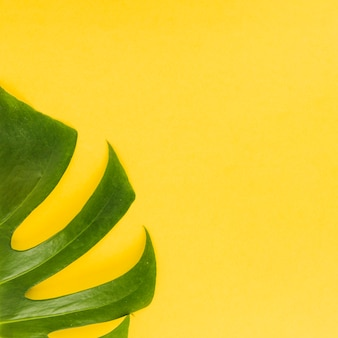 Monstera leaf on bright background