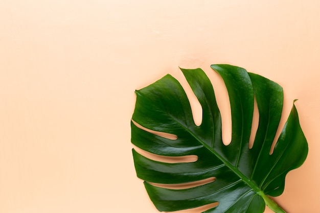 색상 표에 monstera 잎