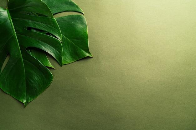 緑の表面にモンステラの葉