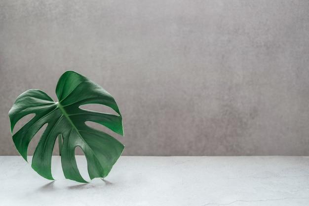 회색 콘크리트 배경 복사 공간에 monstera 잎. 여름 자연 스파 패션 개념.