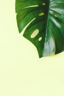 Лист монстера на светло-зеленом цветном фоне с копией пространства выше, по вертикали.