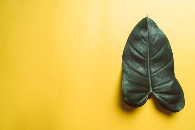 黄色の表面にモンステラの葉