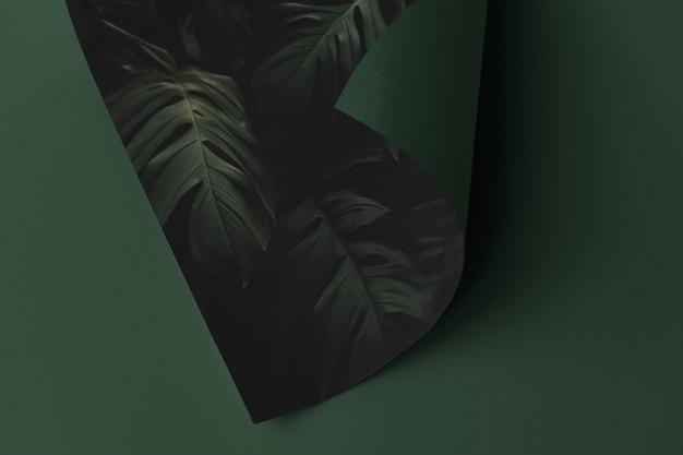 緑の表面にモンステラの葉の紙