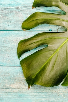 Monstera leaf on a trendy turquoise wooden background