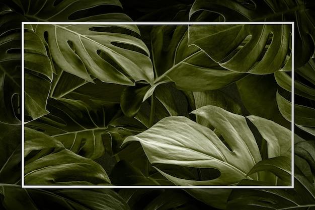 フレームの背景とモンステラの葉