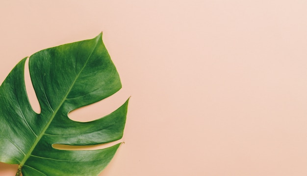 Monstera leave on beige background