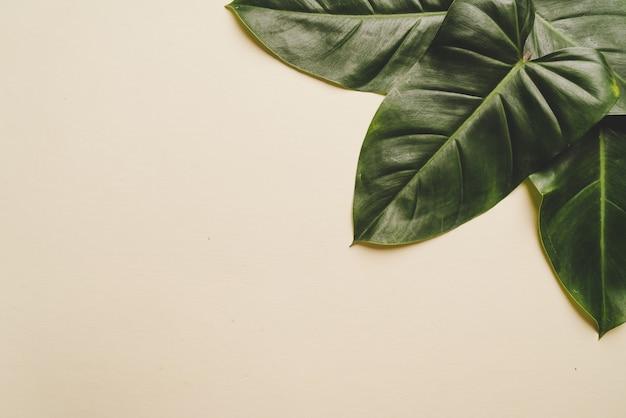 Monstera leave on brown beige background
