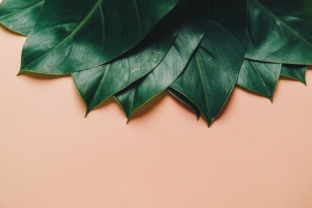 Monstera leave on color background