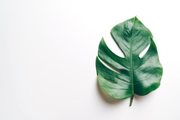 Monstera leave on color table