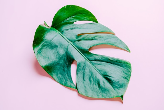Monstera leave on color