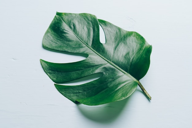 Monstera leave on white