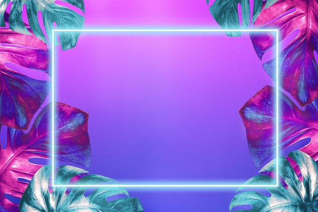 Monstera leaves colored in trendy neon colors and neon frame above them on fashionable pink blue gradient background.