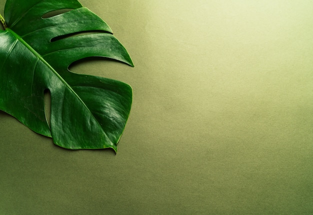 Monstera leaves on green background