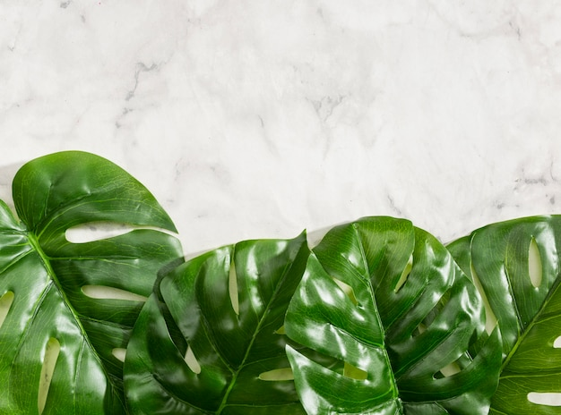 Monstera leaves on marble background