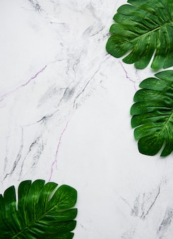 Monstera leaves on a marble background